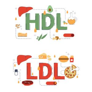 cholesterin HDL LDL