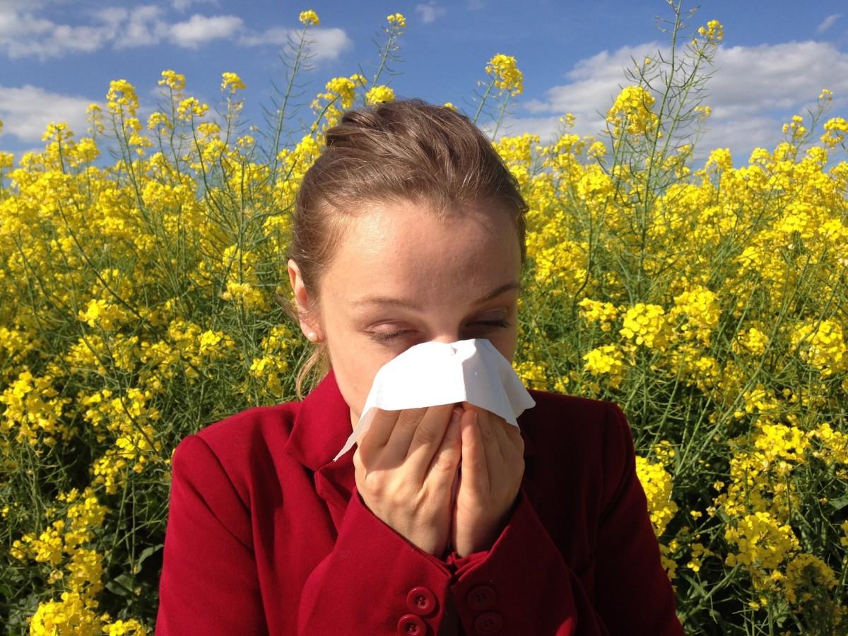 Rapsfeld Allergie